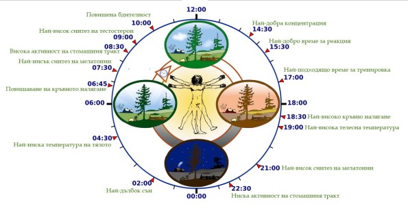 bio-clock
